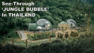 JUNGLE BUBBLE surrounded by RESCUED ELEPHANTS (Anantara Resort THAILAND)